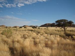 Graslandschaft auf Ihrem Weg von Lüderitz bis in die Tirasberge