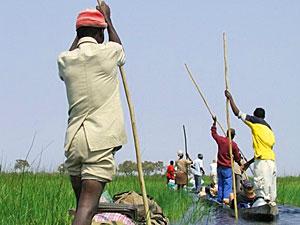 Ihr Guide manövriert Sie sicher durch das Okavango Delta