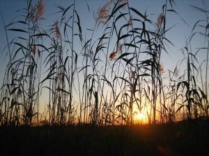 Botswana - Vegetation im Okavango Delta - Sonnenuntergang - Rundreise Namibia Botswana