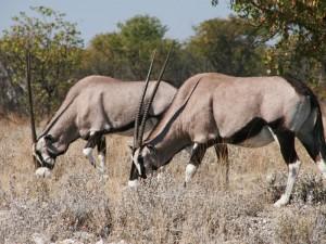 Weiterreise Epupa Falls Namibia Etosha Nationalpark