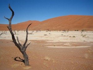 Wüste Baum Deadvlei Namibia Highlights