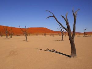 Sossusvlei Namibia Kalkebene Deadvlei Bäume