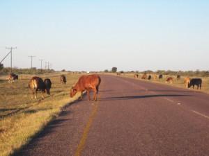 Begegnungen unterwegs in Namibia