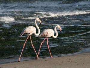 Namibia - Flamingos in Swakopmund - 2 Wochen Namibia