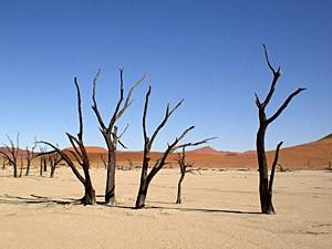 Namibia - Sossusvlei - Tote Bäume im Deadvlei - von Windhoek zu den Victoria Fällen