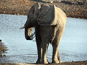 Namibia - Etosha Nationalpark - Elefanten am Wasserloch im Etosha - von Windhoek zu den Victoria Fällen