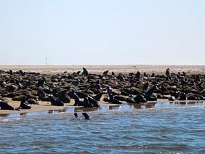 Robbenkolonie Cape Cross Namibia Swakopmund - Von Windhoek zu den Victoria Fällen