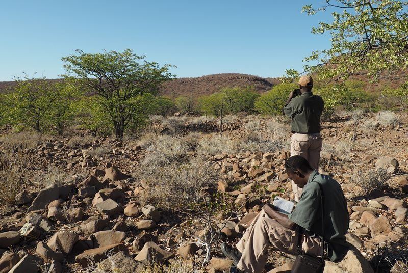 Rhino Tracking im Damaraland