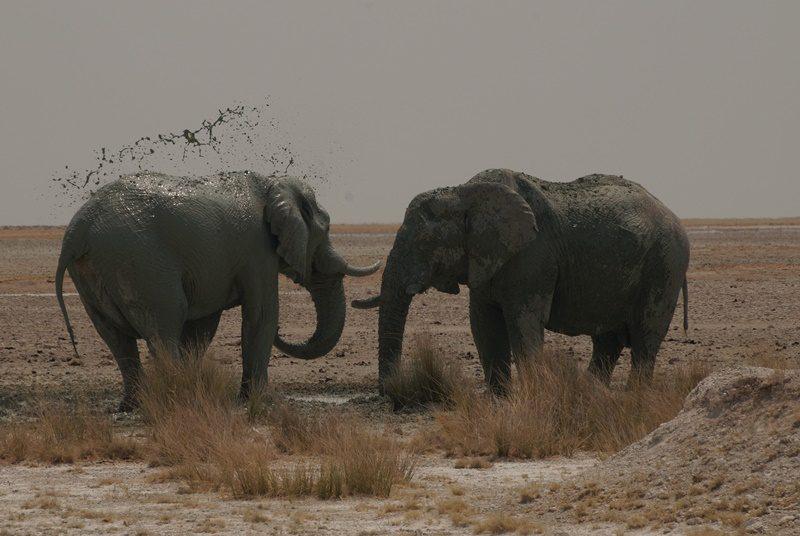 Elefanten im Schlamm
