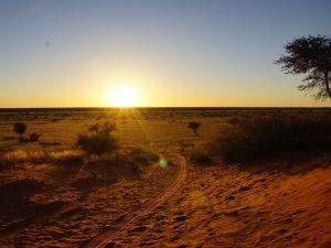 Namibia - Kalahari Wüste - Sonnenuntergang in der Kalahari Wüste - Ankerkraut