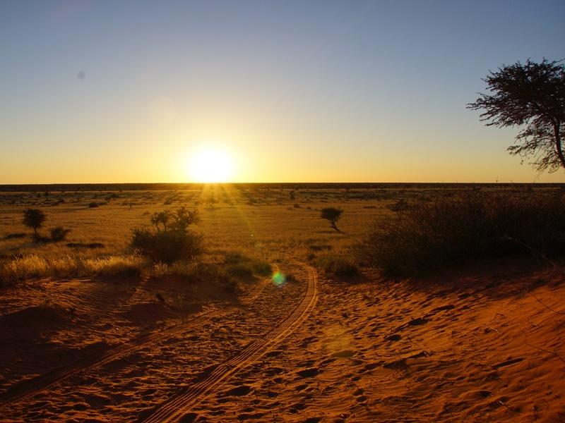 Sonnenuntergang in der Kalahari Wüste
