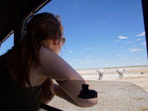 Namibia mit Kindern - Etosha Nationalpark - Elefanten