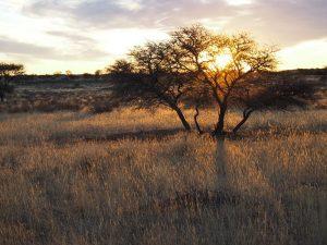 Namibia - Von Windhoek nach Kapstadt