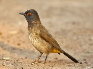 Namibia - Tierreiche Natur - Von Windhoek nach Kapstadt