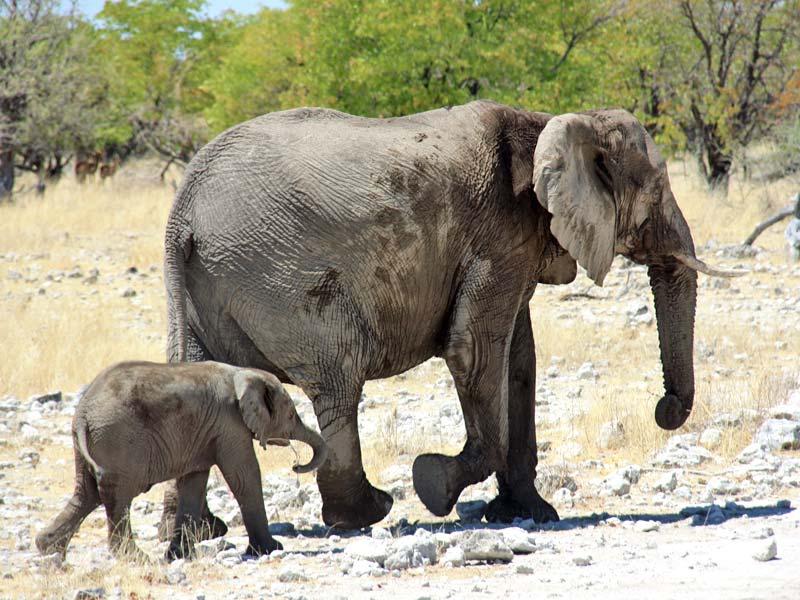 Namibia Familienreise Etosha Nationalpark Elefanten