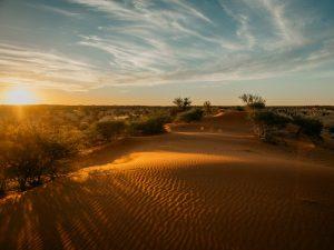 Namibia - Kalahari - Sonnenuntergang in der Wüste - Ankerkraut