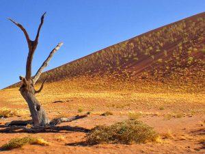 Namibia - Sossusvlei - Namibia Familienreise