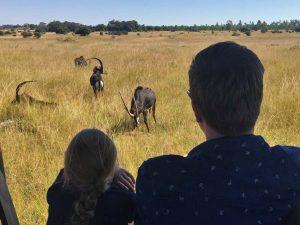 Auf Safari mit Kindern