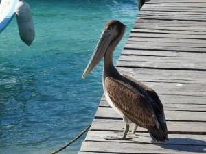 pelikaan-mexico-reis