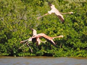 flamingo's in mexico rio lagartos