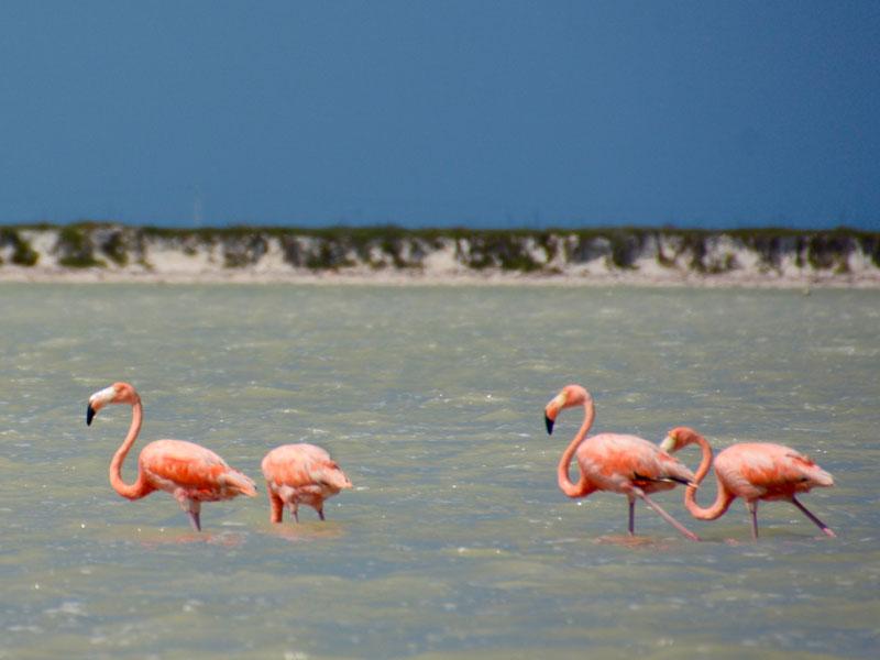 Flamingos en krokodillen Mexico Kids - Rio Lagartos