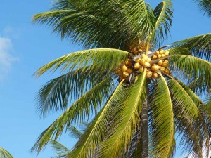 snorkelen Mexico Kids - palmboom