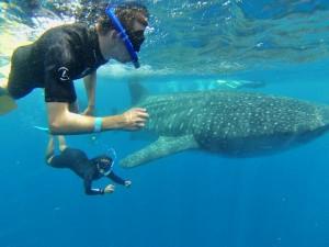 zwemmen-met-walvishaai-mexico-reis