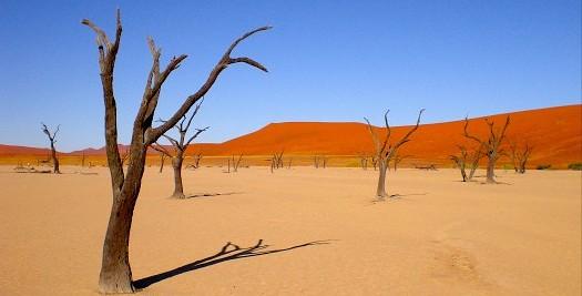 Namibie reis - Dodevlei
