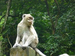 Bali mit Kindern: Affe in der Monkey Sanctuary in Ubud