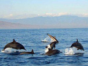 Rundreise Bali & Komodo: Delfine bei Lovina