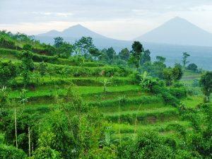 Bali Rundreise: Reisterrassen in Ubud