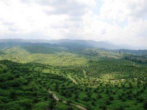 Indonesien Rundreise: Blick über den grünen Dschungel