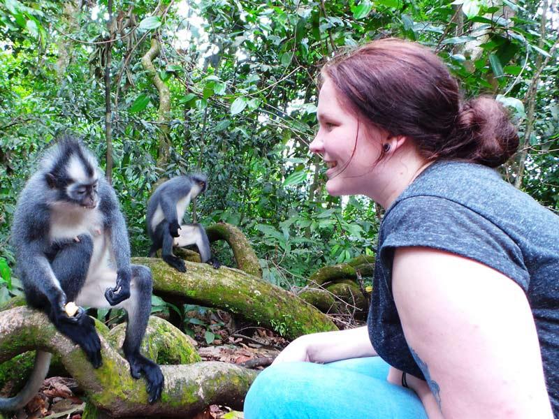 Affen beobachten im Dschungel von Tangkahan