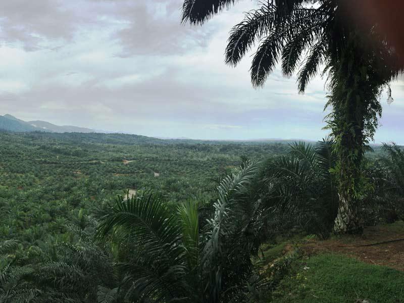 Unterwegs im Dschungel von Tangkahan