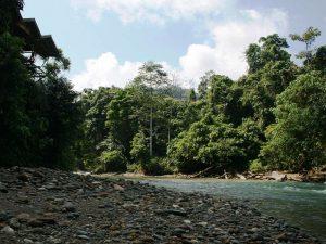 Flussufer von Tangkahan
