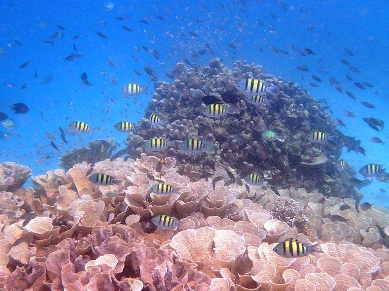 Bunte Fische im Riff