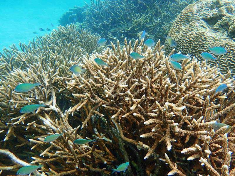 Korallenriff bei Lovina