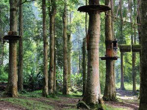 Lovina: Bali Tree Top Adventure Park