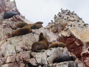 dieren-spotten-kust-peru