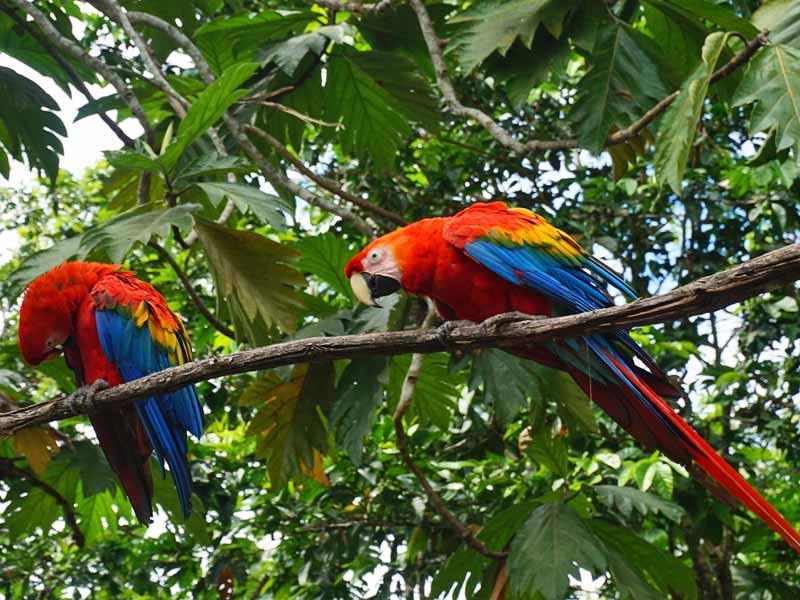 Amazone Peru Kids - papegaaien Puerto Maldonado