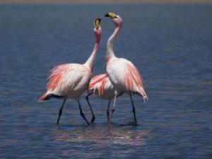 flamingos-peru-met-kinderen