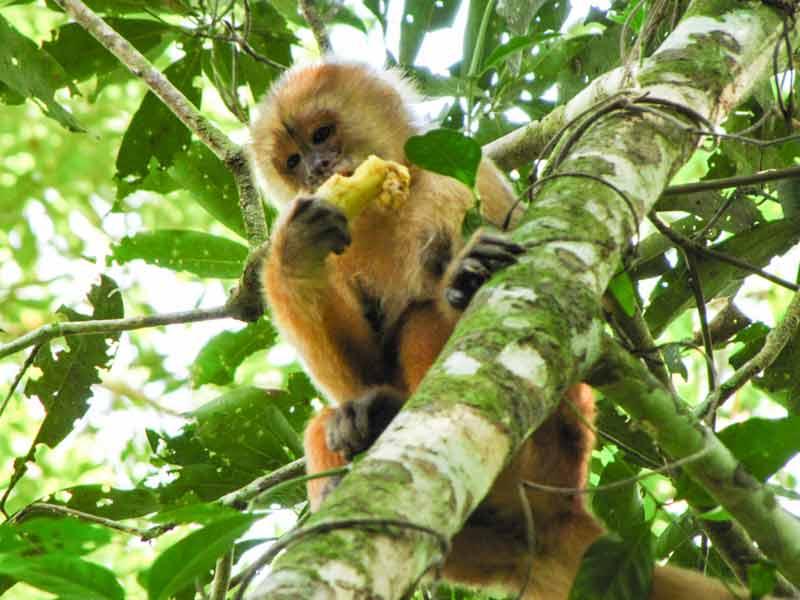 Amazone Peru Kids - aap