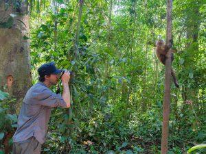 apen-spotten-peru-jungle