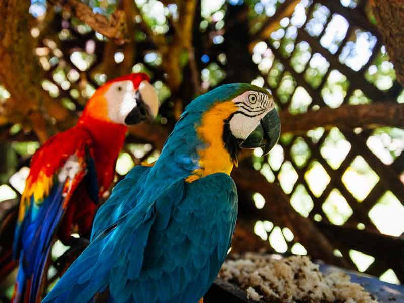 Amazone Peru Kids - ara