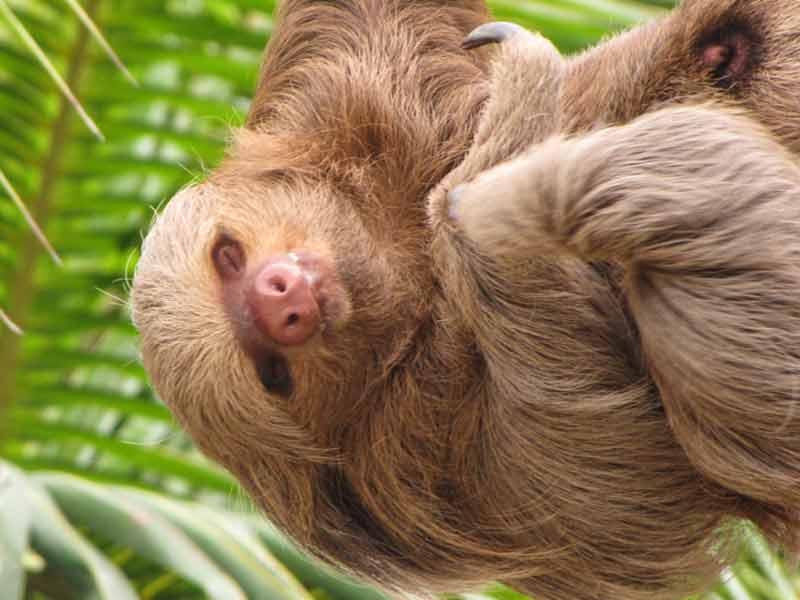Amazone Peru Kids - luiaard