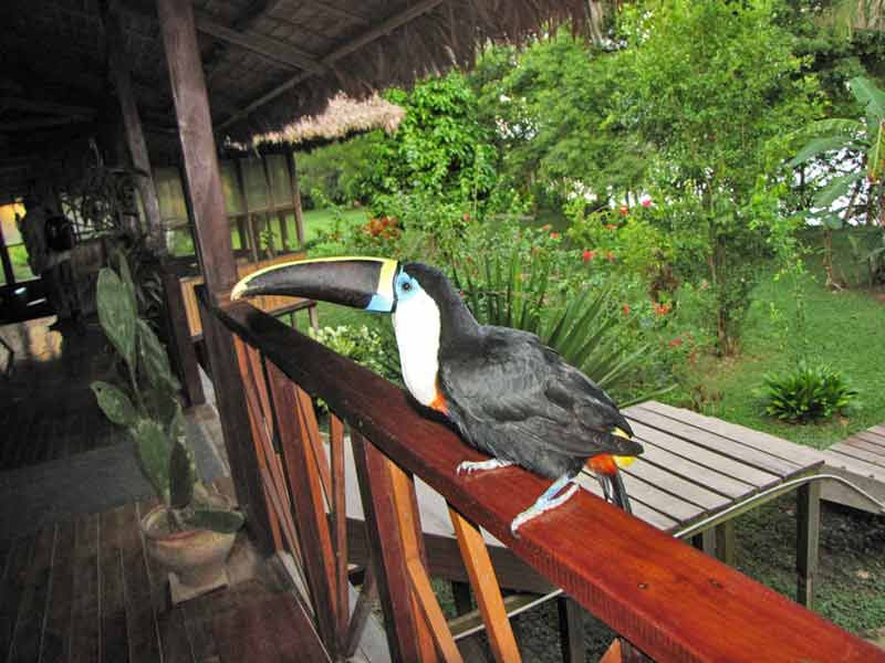 Amazone Peru Kids - toucan lodge