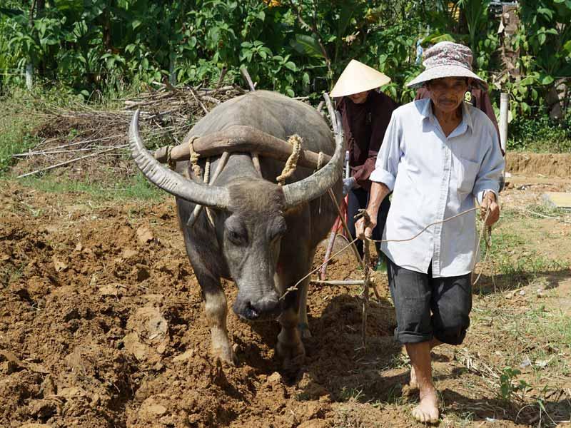 Hué Vietnam - boerderij