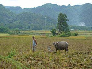 rijstvelden Mai Chau - rondreis Vietnam net even anders