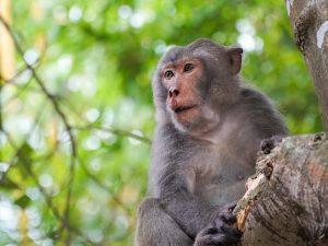 Op Robinson expeditie - wildlife Cham eiland, Vietnam