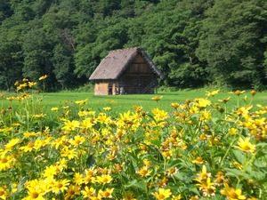Landelijke omgeving van Takayama met gele weidebloemen